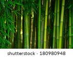 Green Bamboo Tree In A Garden