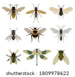 flying insect set. isolated... | Shutterstock .eps vector #1809978622