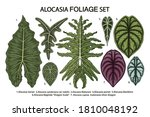 vintage vector botanical... | Shutterstock .eps vector #1810048192