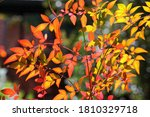 Rust And Yellow Leaves On A...