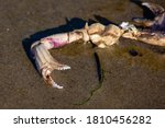 Part Of A Dead Crab On The...