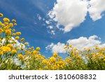 Landscape. Yellow Flowers...