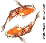 Koi Fish Crap Vector And Image...