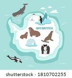 antarctica wildlife. animal ...   Shutterstock .eps vector #1810702255
