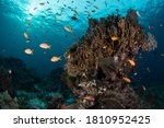 Colorful Wide Angle Image Of A...