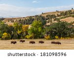 a herd of american buffalo... | Shutterstock . vector #181098596
