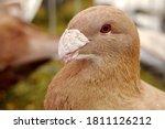 Beautiful Bird  Head Of Brown...