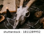 White Goat Scull With Horns ...