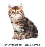 Stock photo little kitten isolated on white background 181142966