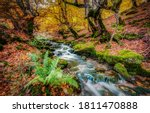 Autumn Forest River Creek Flow...