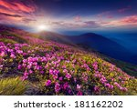 magic pink rhododendron flowers ... | Shutterstock . vector #181162202