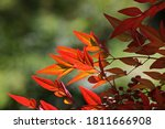 View Of Russet Coloured Leaves...