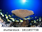 Tiny Coral Larvae Detect And...