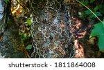 Turkey Tail Mushrooms Growing...