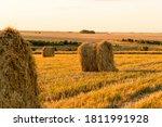 Field After Harvest. Haystacks...