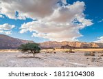 Lonely Tree In Desert Of The...