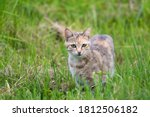 Young Wild Feral Cat In Green...