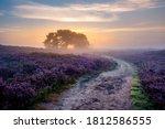 Blooming Heather Fields  Purple ...