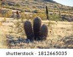 The Three Amigos Of Arizona