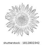 black and white sunflower on... | Shutterstock .eps vector #1812802342