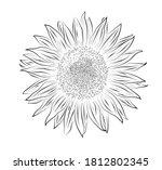 black and white sunflower on... | Shutterstock . vector #1812802345