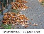Heaps Of Fallen Autumn Leaves...