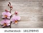 pink orchid on a wooden... | Shutterstock . vector #181298945