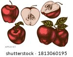 vector set of hand drawn... | Shutterstock .eps vector #1813060195