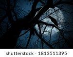 Creepy Black Crow Croaking On...
