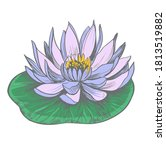 water lily. lotus. hand drawn... | Shutterstock .eps vector #1813519882