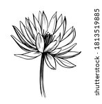 water lily. lotus. hand drawn... | Shutterstock .eps vector #1813519885