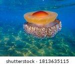 Mediterranean Jellyfish ....