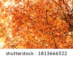 Autumn Leaves Background. Fall...