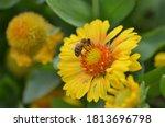 Close Up Macro Honey Bee...