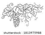 bunch of grapes with leaves.... | Shutterstock .eps vector #1813975988