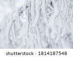 Snow And Rime Ice On The...