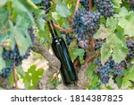 bottle with red wine no label... | Shutterstock . vector #1814387825
