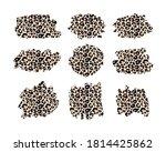 hand drawn vector leopard... | Shutterstock .eps vector #1814425862