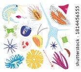microorganisms of marine... | Shutterstock .eps vector #1814456555