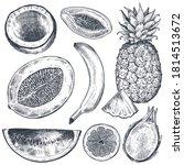 set of hand drawn fresh fruits... | Shutterstock .eps vector #1814513672
