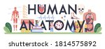 human anatomy typographic... | Shutterstock .eps vector #1814575892