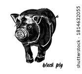 Black Pig. Farm Animal. Cute...