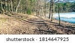 sunny winter day in the forest... | Shutterstock . vector #1814647925