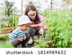 Small photo of Mother and son toddler boy on organic vegetable farm in summer.Mother with kid Harvesting Organic vegetable morning glory on farm at home.Home school kid learning how to vegetable growth with mother.
