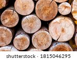 Sections Of Wooden Logs Close Up