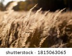 Close Up Grass On Mountain In...