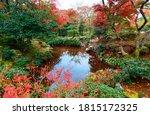Autumn Scenery Of Fiery Maple...