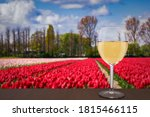 Glass Of White Wine Against Re...