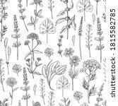 hand drawn medicinal herbs. ...   Shutterstock .eps vector #1815582785