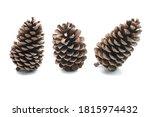 Big Set Of Pine Cones Various...